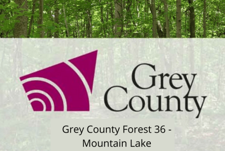 Grey County Forest 36 - Mountain Lake