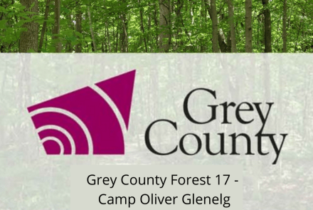 Grey County Forest 17 - Camp Oliver Glenelg