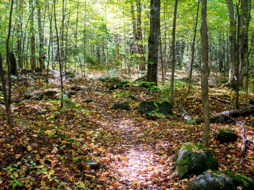 Hiking trail in fall