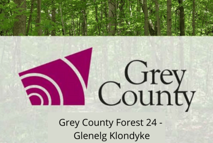 Grey County Forest 24 - Glenelg Klondyke