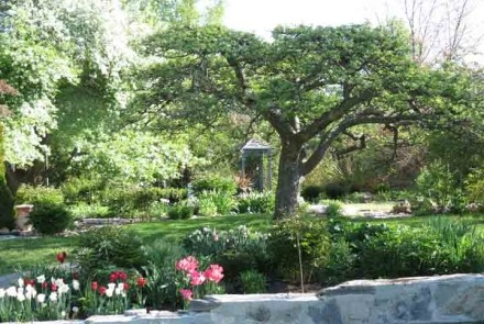 Early in the gardening season visitors enjoy the spectacular flowering shrubs and trees.