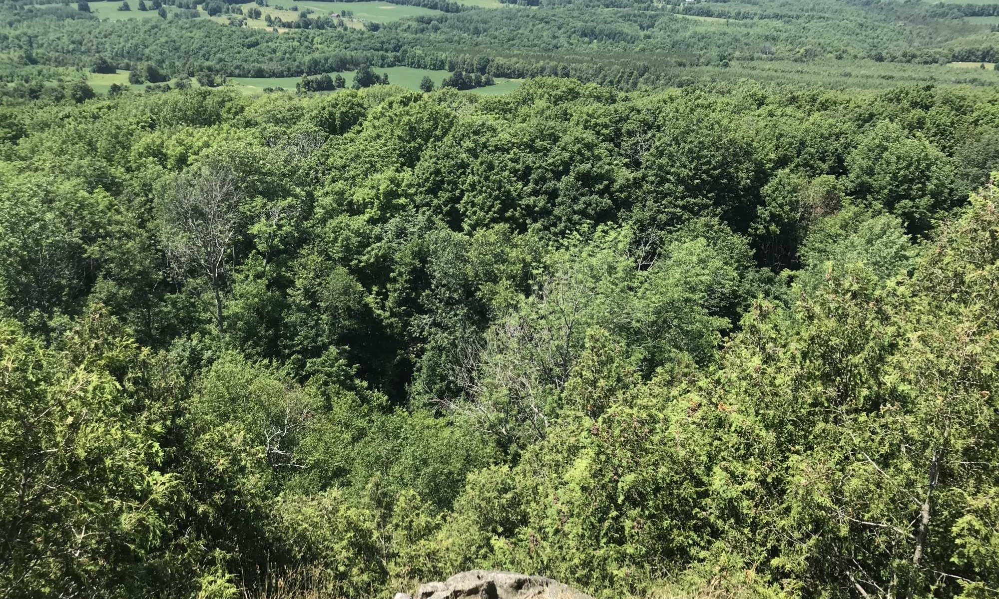 Bruce Trail Lookout
