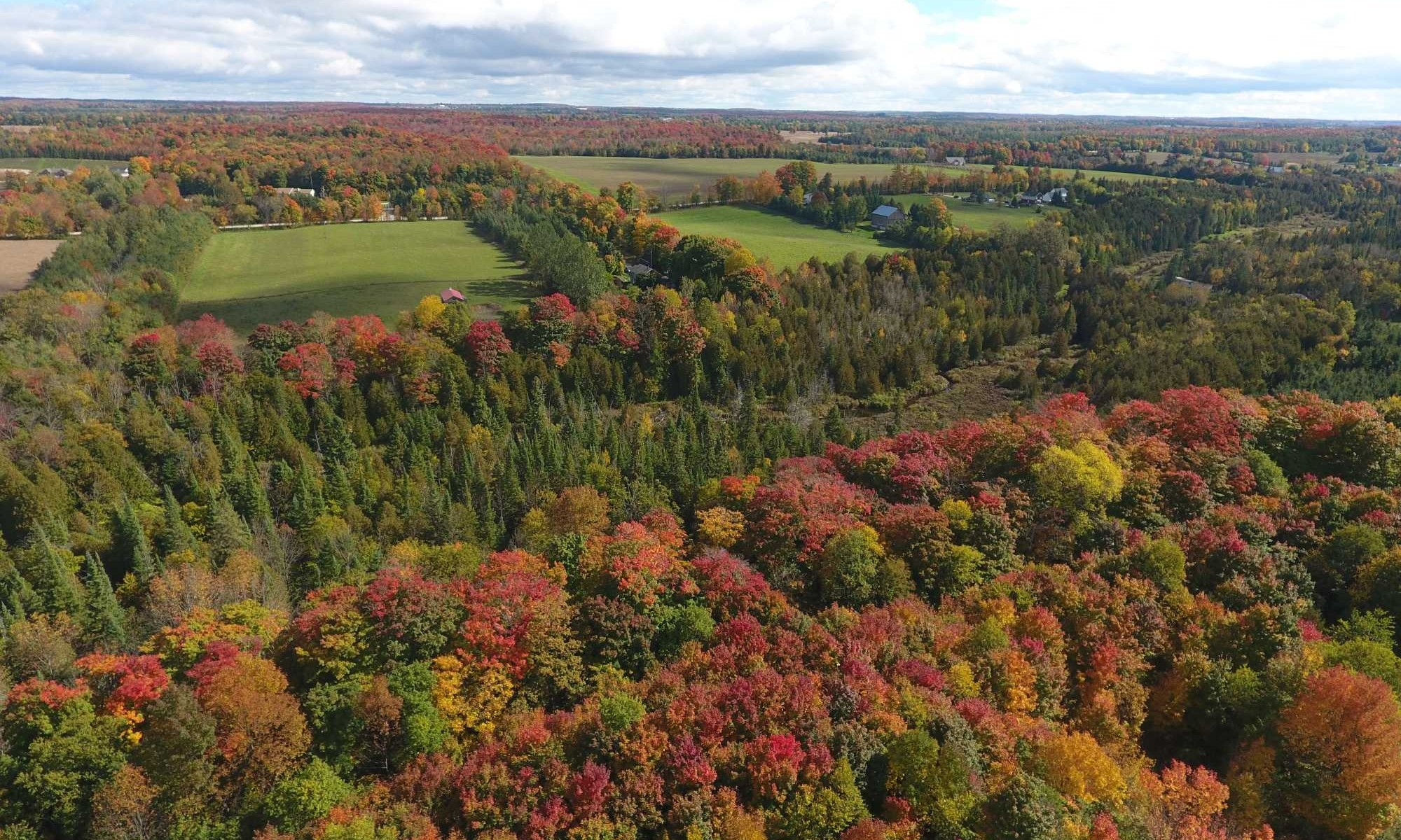 Grey County Fall Landscape