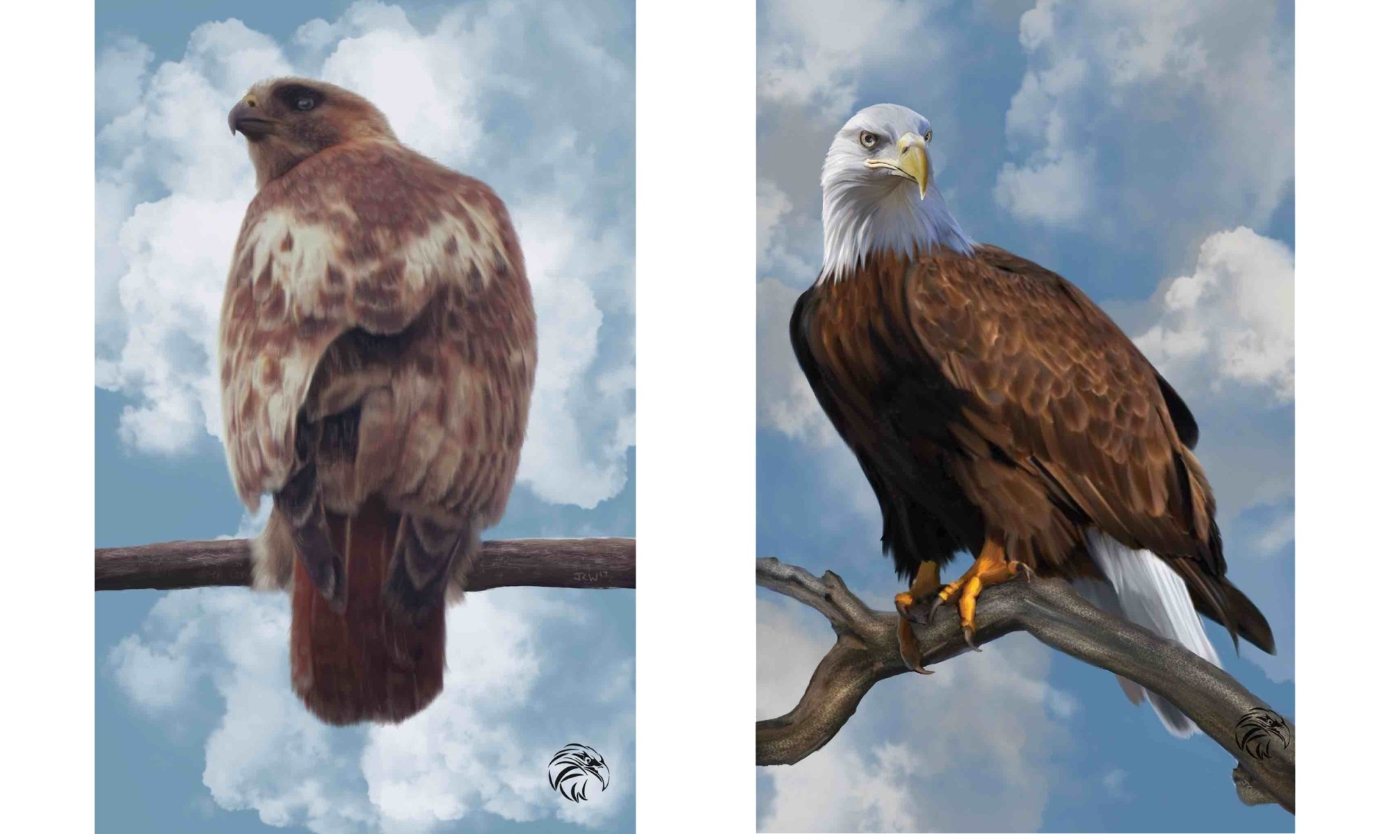 Jeremy Walpole's Red-tailed Hawk & The Eagle Stare