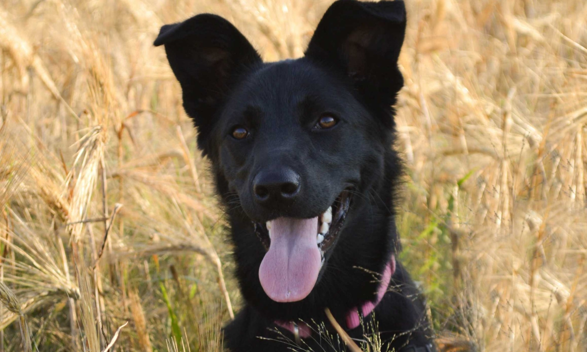 June, the farm dog