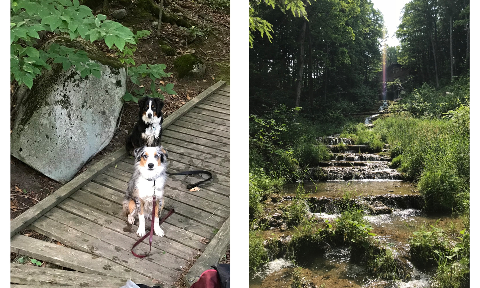 Bruce Trail Images